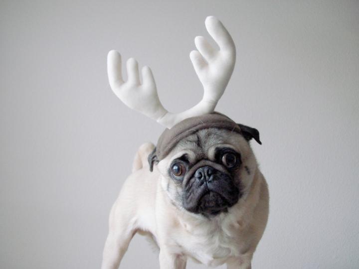 pug reindeer